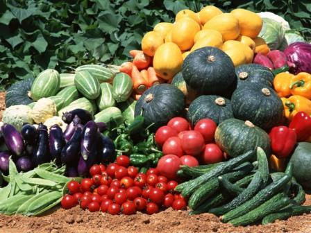 Щедрый урожай – это просто по моей новой идее